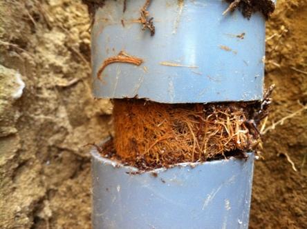 根っこが排水管を突き破る